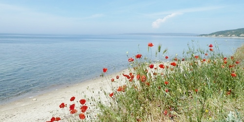 Poppies-Original-Landing-Point-Gallipoli