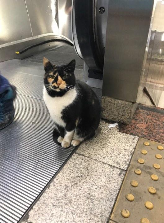 Taksim kedi